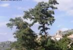 Geocaching en Cuenca_portada